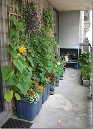 Grow fruit and vegetables in containers
