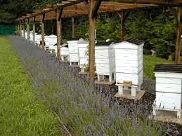 Beekeeping for Beginnera